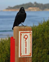 911 sign and crow omen