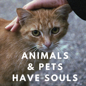 animals and pets have souls